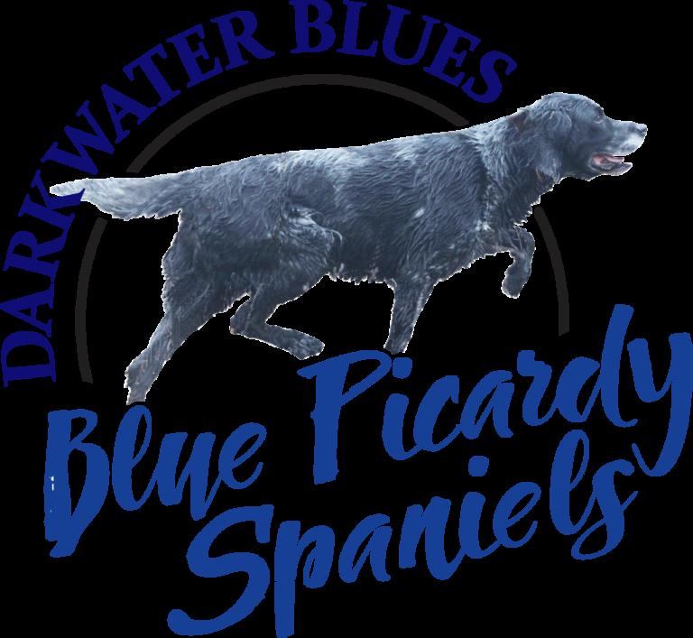 Darkwater Blues logo